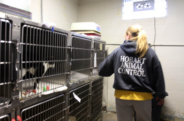 Humane Society of Hobart hopes to find new homes for 33 cats
