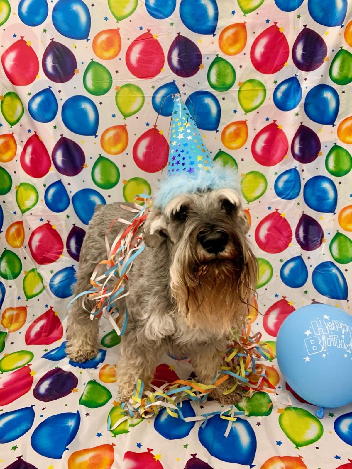 Henry Holcomb, Indiana's 'First Dog,' celebrates 10th birthday