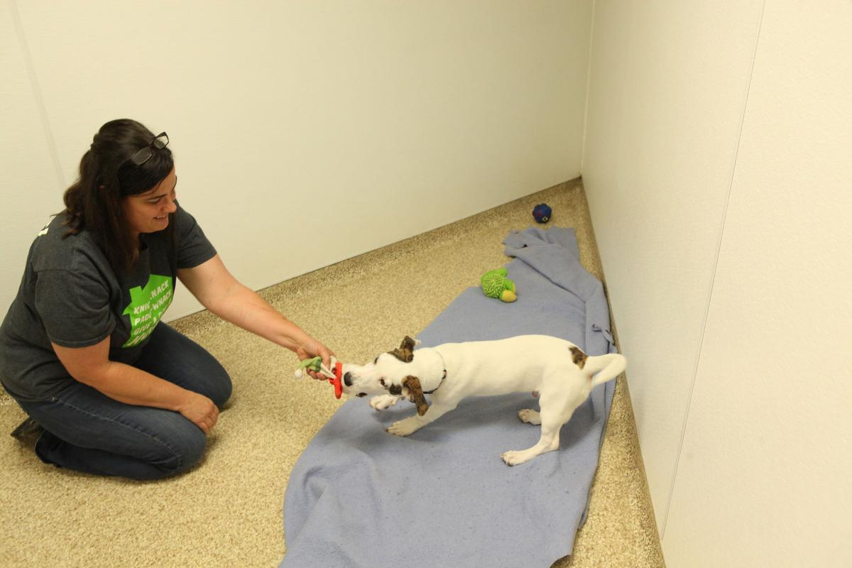 Alsip To The Rescue Provides A Safe Haven In St John