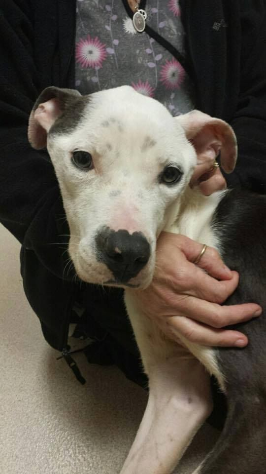 Rescue group raising funds to care for malnourished dog