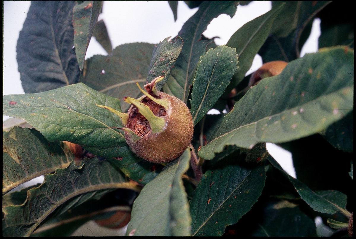 Gardening Unusual Fruits