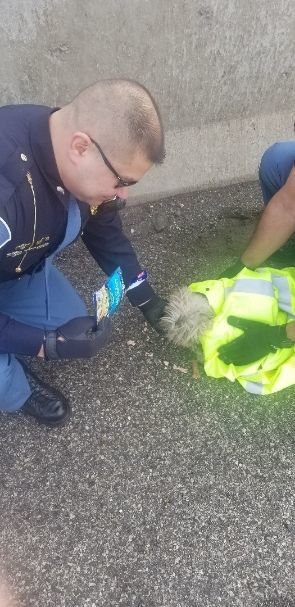 Scared, 'unbelievably cute' dog rescued from Toll Road; police seek owner