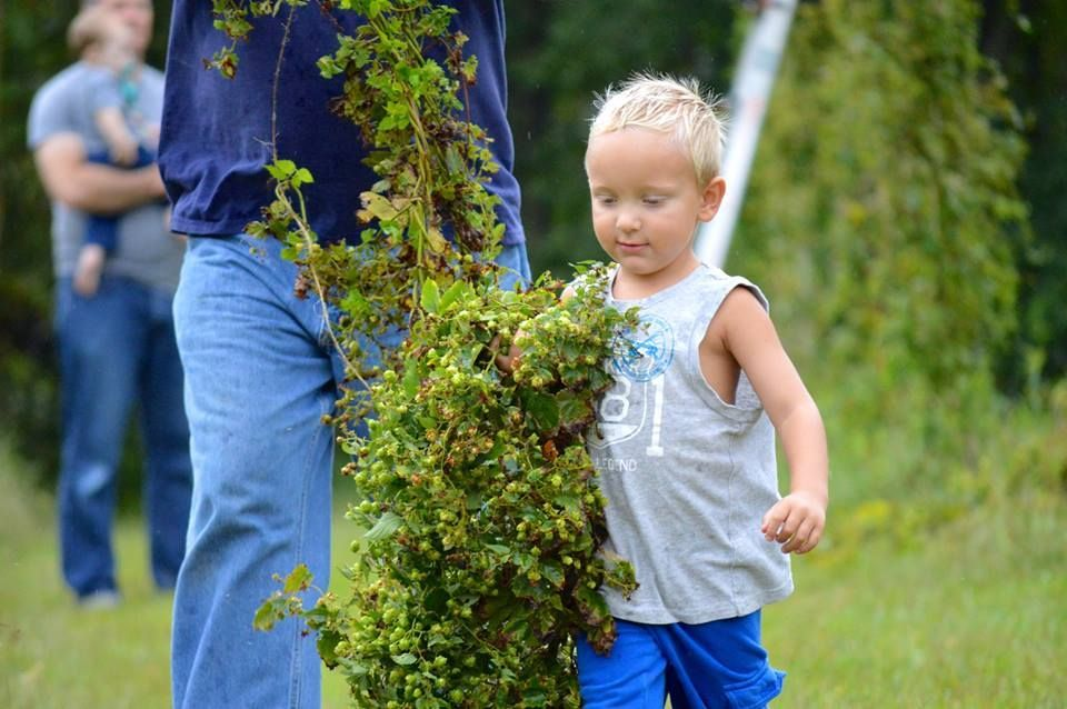 NWI hops farm blossom as craft beer booms