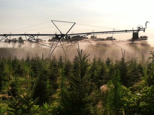 'Growing Family Traditions:' Christmas tree farms help ...