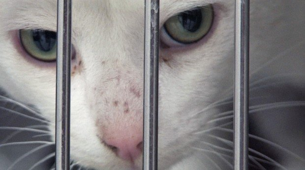 Animal Shelters Pounded By Economy South Suburban News Nwitimes Com