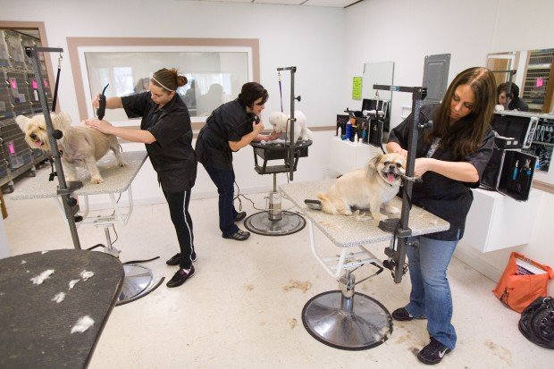 Valentine One Dog Grooming Schools