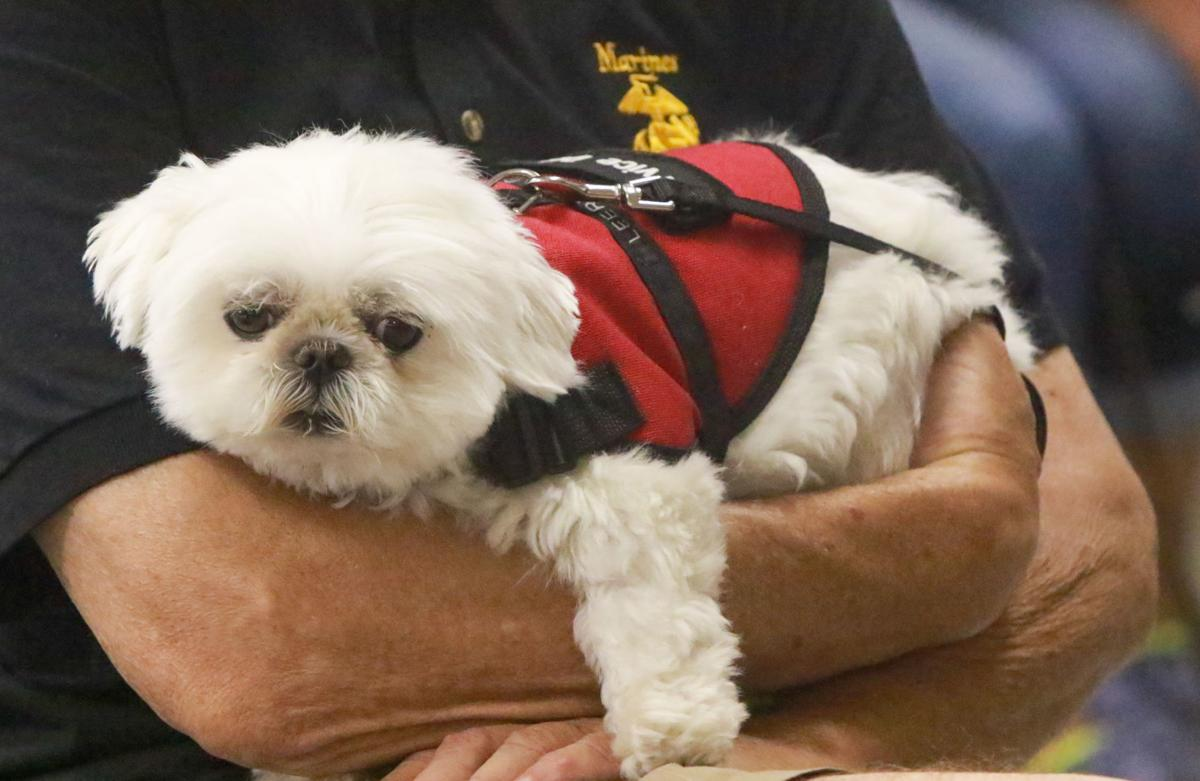 Patriots Training Service Dogs