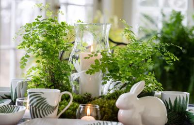 botanicals in the home