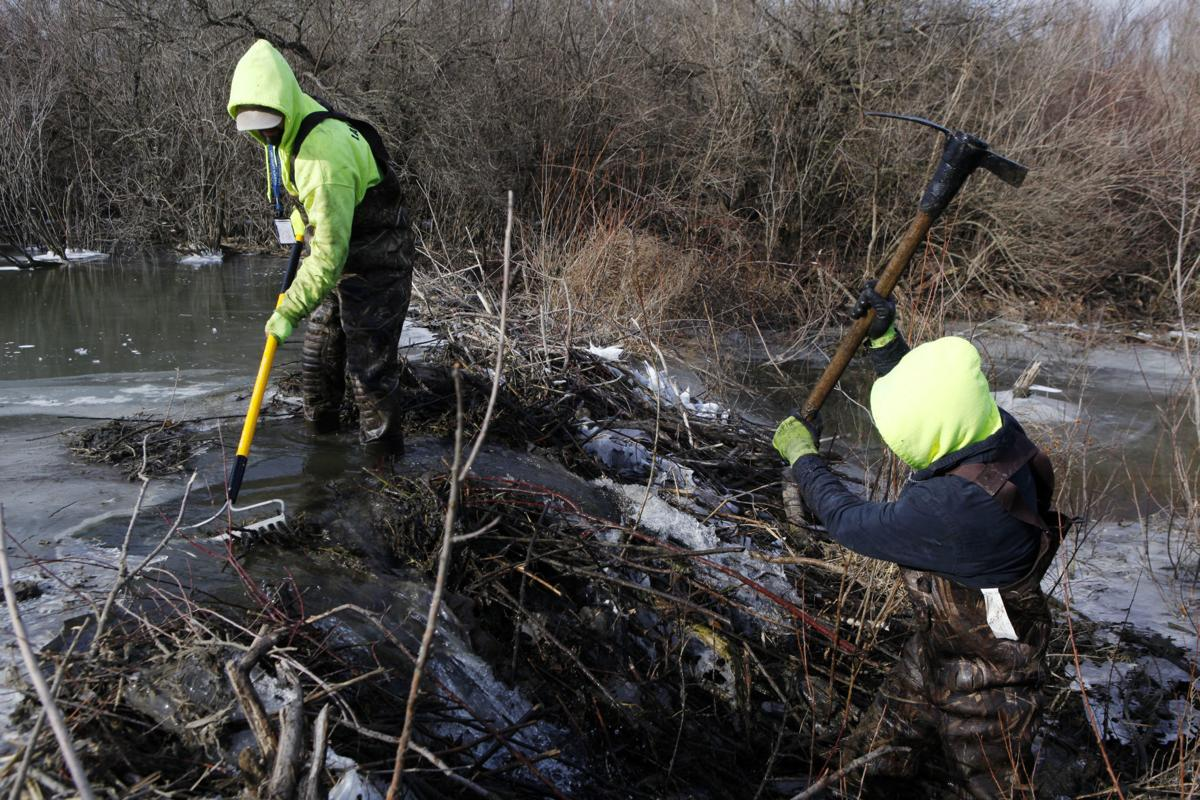 Removing beaver dams in Lake County