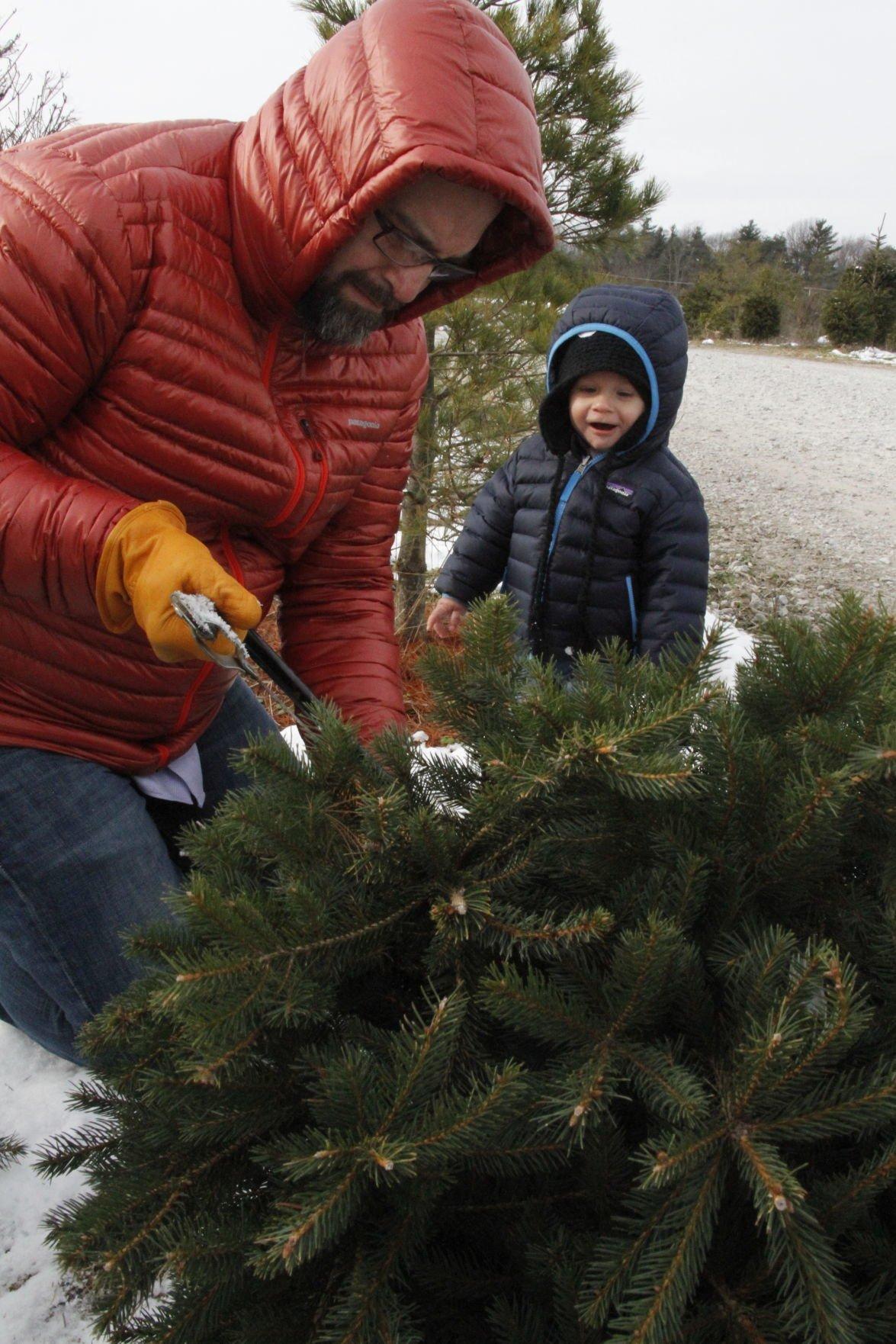 Luers Christmas tree farm becoming a holiday memory | Lake ...