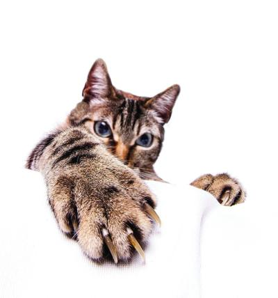 Declawing cats becoming frowned upon | Healthy Living
