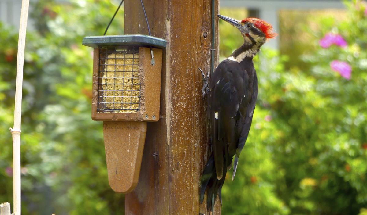Gardening Woodpecker Damage