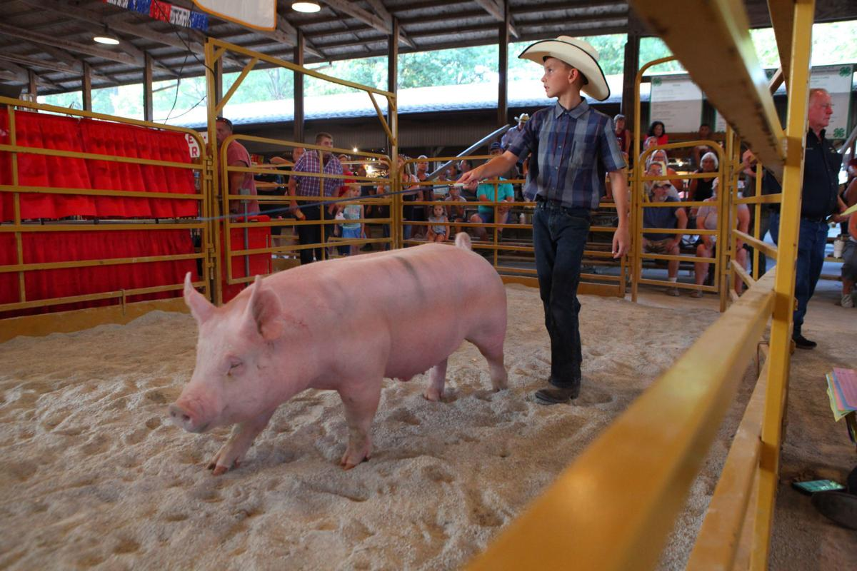 4 h large animal auction herds potential buyers to the lake county 4 h auction at the lake county fair thecheapjerseys Choice Image