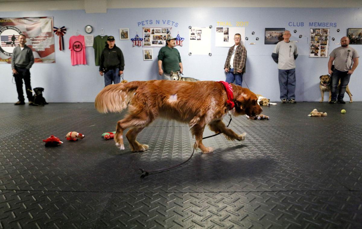 xxxx17-fea-dogs-p6
