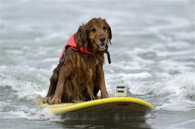 Dogs day afternoon: dress your pooch for the beach