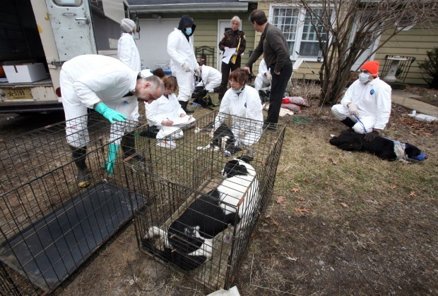 About 35 dead, living dogs found in feces-filled home