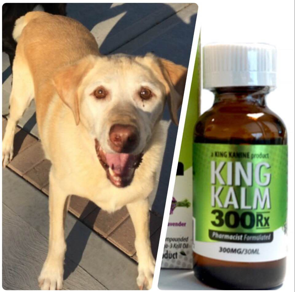 Hammond mayor, and his dog, confront Indiana attorney general over CBD oil