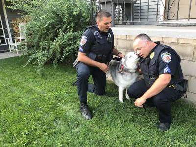 Dog-loving Crown Point cops rescue scared husky from pool