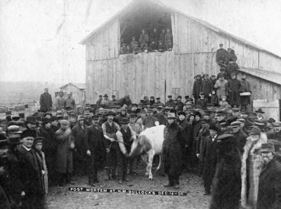 Milking history