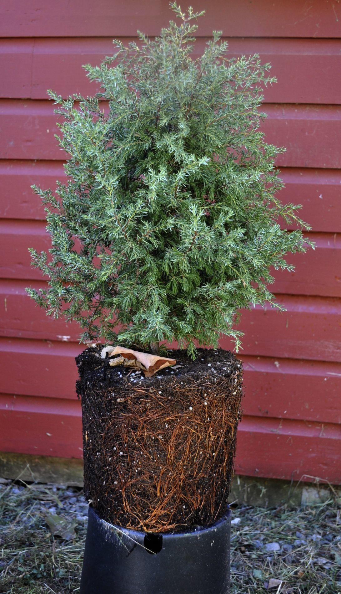 Gardening Planting Trees