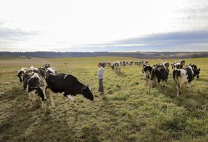 Grass fed: $10 million initiative seeks to boost farmers, economy and environment with grazing