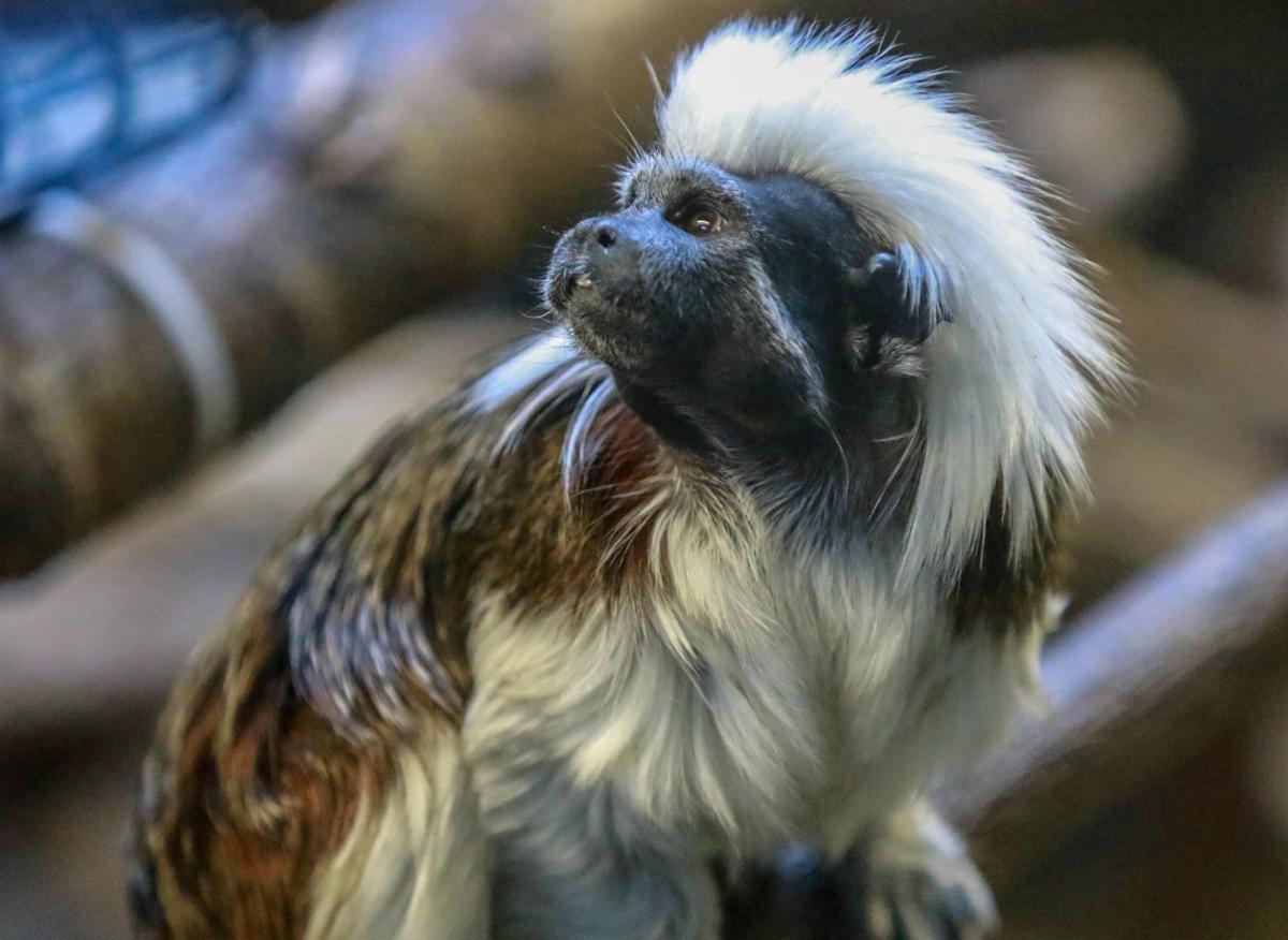 The Washington Park Zoo turns 90 this year.