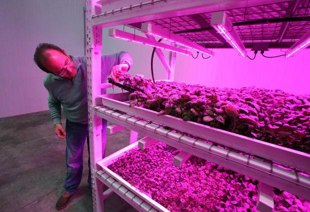 Green Sense Farms indoor farm