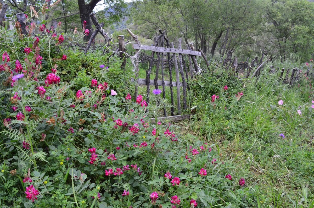 Gardening Wattle Fences