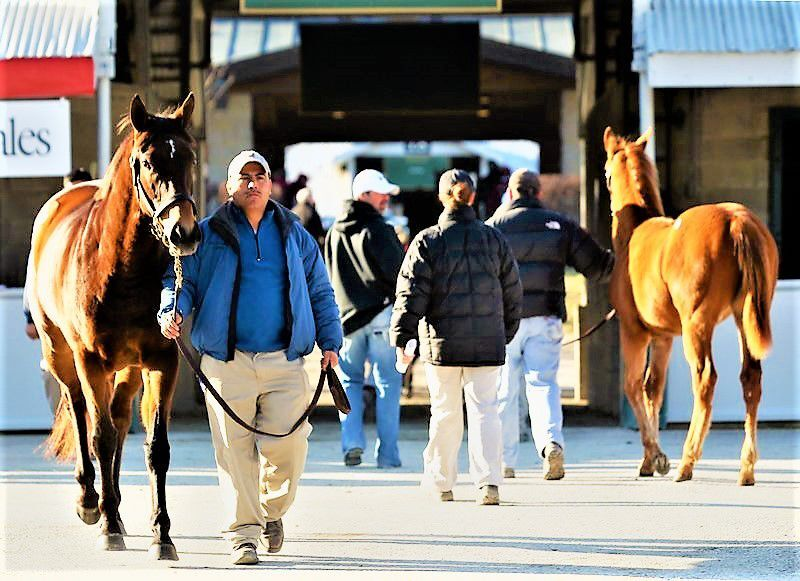Scenics, 2013 Keeneland January Horses of All Ages Sale