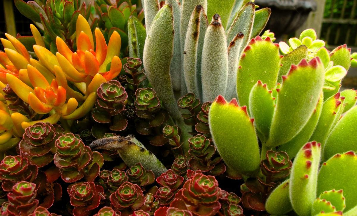 Gardening Caring For Houseplants