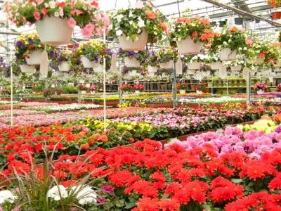 Best Garden Nursery Alsip Home