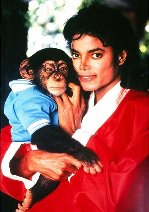 Michael Jackson's monkey pet adopted