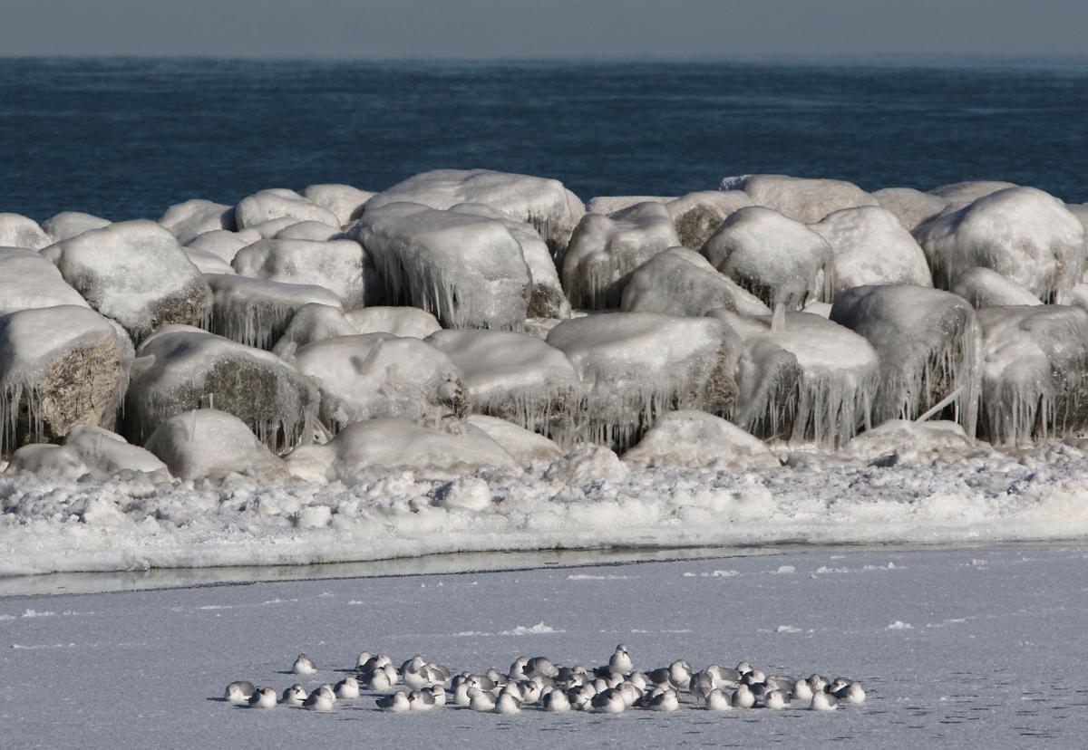 Laporte county under winter weather advisory laporte for Laporte county news