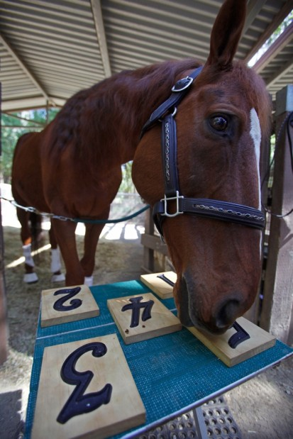 Horse used to spook in own stall, now a trick star