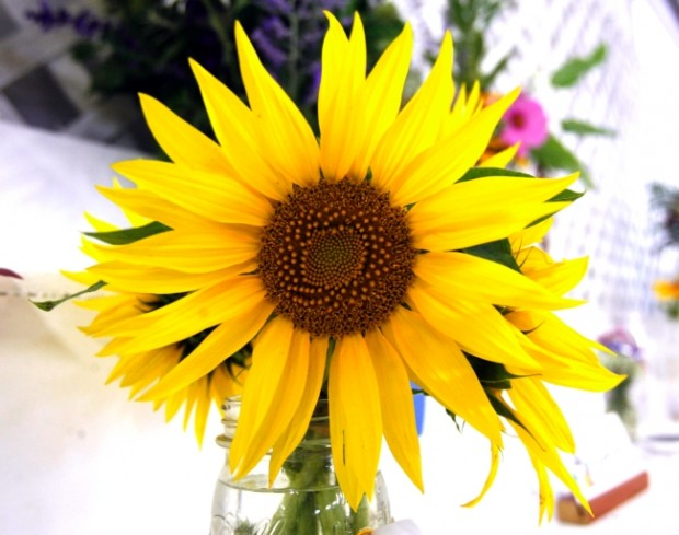 Flower judging, woodworkers' toy demonstrations headline fair's opening day