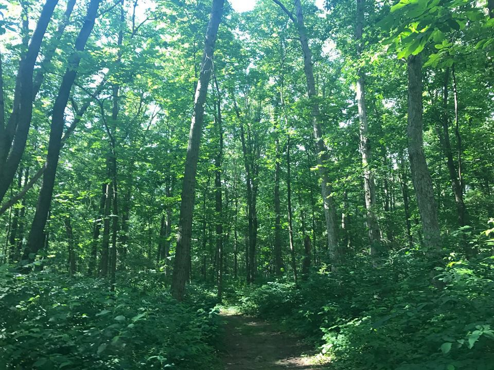 Purdue Northwest hopes concert series will make Gabis Arboretum like Red Rocks