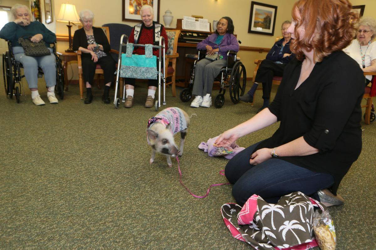 Paddington Baird the pig visits seniors