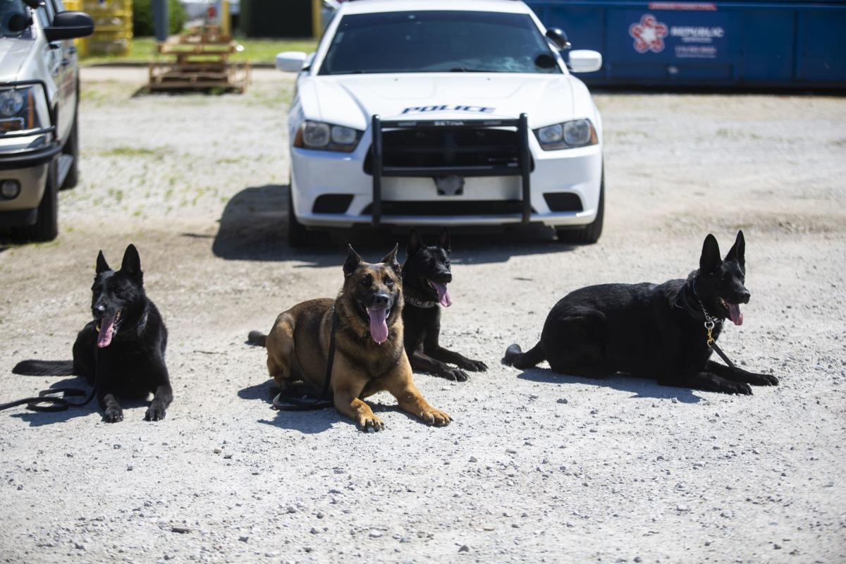 Police training goes to the dogs
