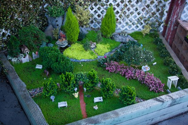 A little garden magic Gardeners embrace miniature plants as