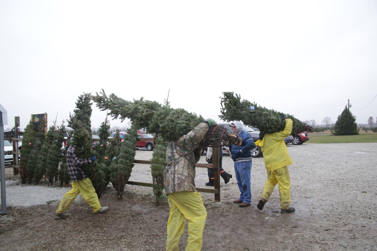 Guse Christmas Tree Farm