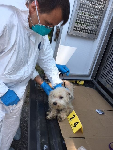35 dogs found in Michigan City home where woman was covered with feces, lice and maggots