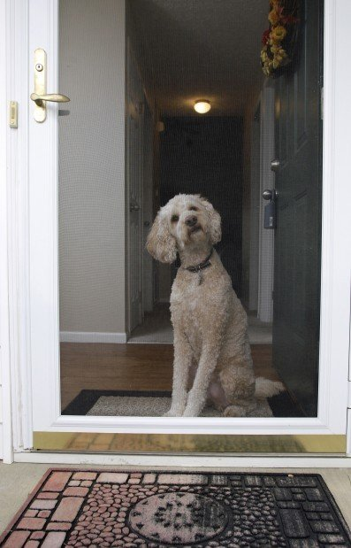 How To Train A Dog To Stop Jumping At The Door Nwiparent