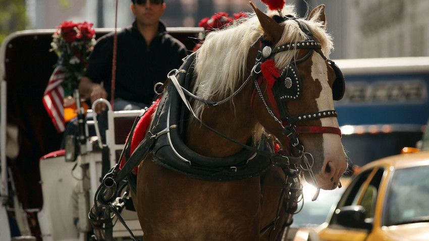 City Council Votes To Improve Conditions For NYC's Horse Drawn Carriages