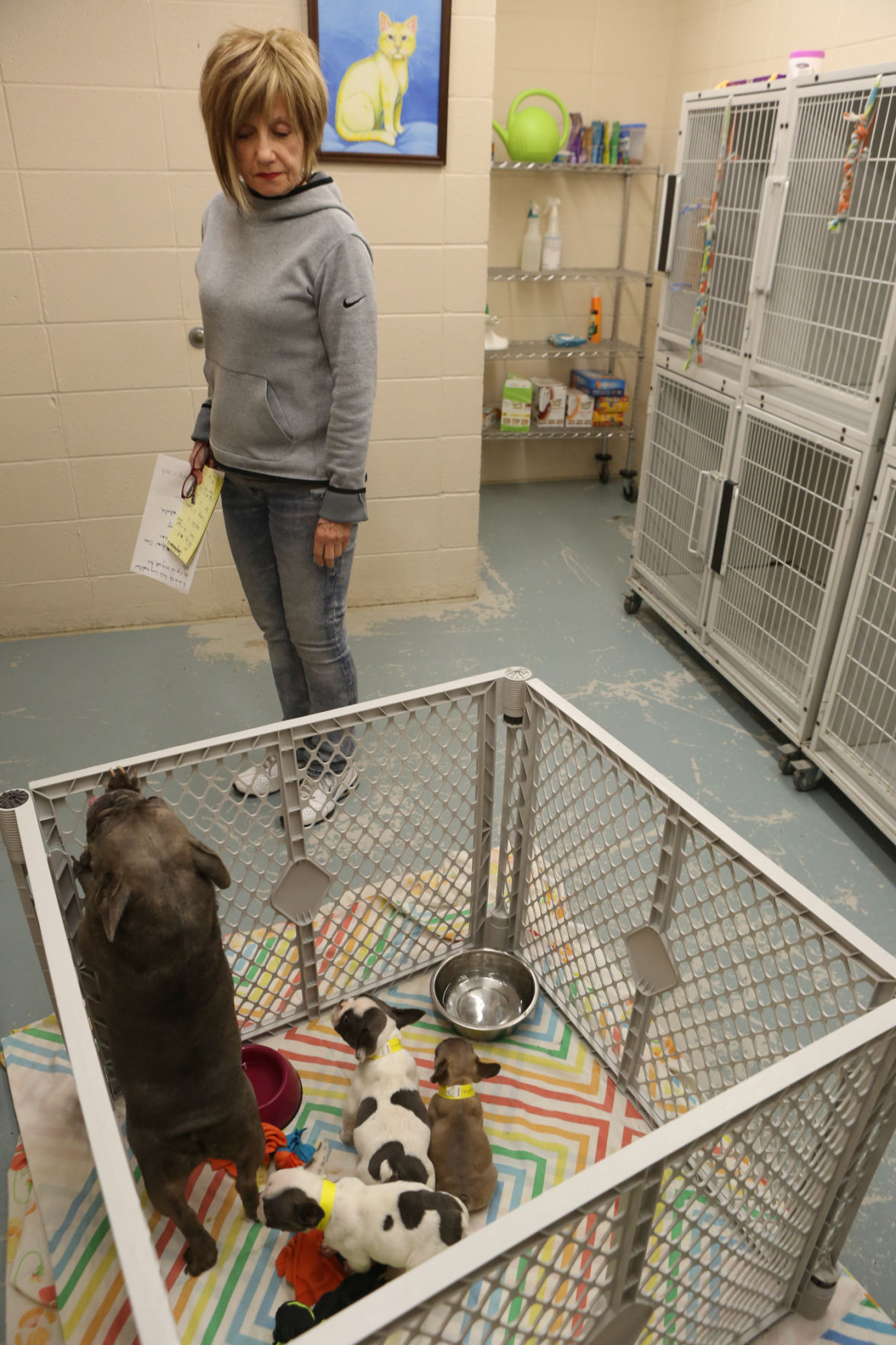 Seized dogs from a raid