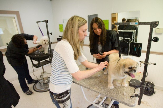 SMALL-BUSINESS SPOTLIGHT: Business, grooming school grow from love of dogs  | Northwest Indiana Business Headlines | nwitimes.com