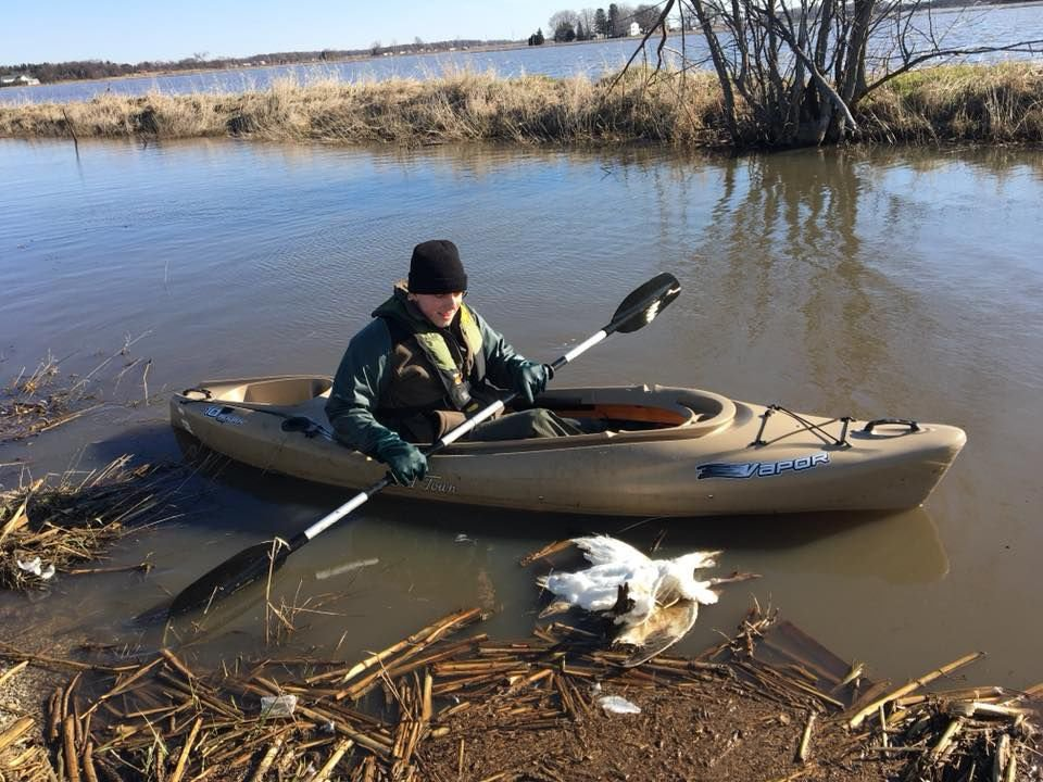 State conservation police investigating illegal dumping of nearly 100 dead snow geese