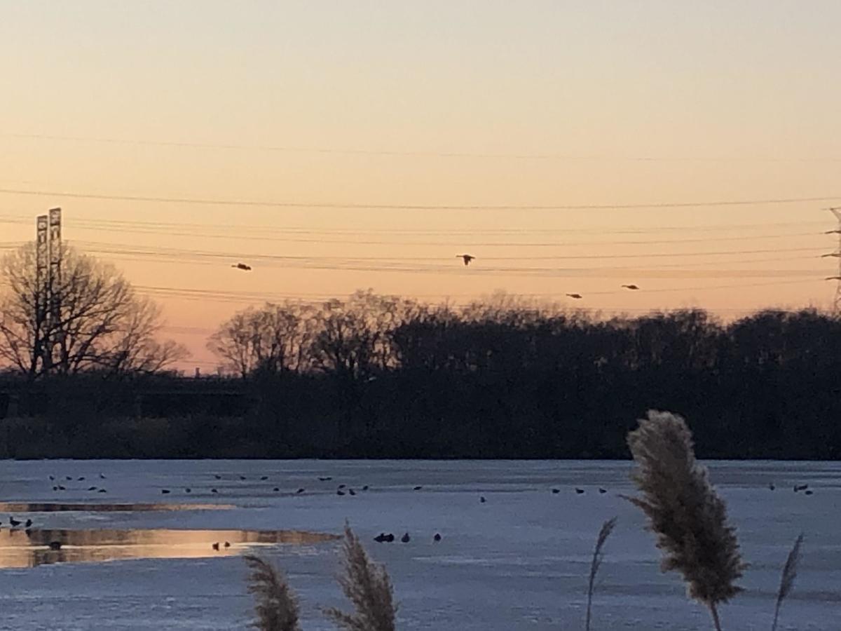 geese shot 1.jpg