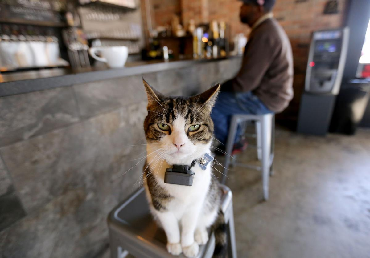 Luther, Windmill Brewery house cat