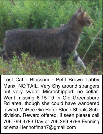 Lost Cat - Blossom - Petit Brown Tabby