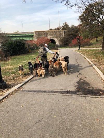 NYC dog walker